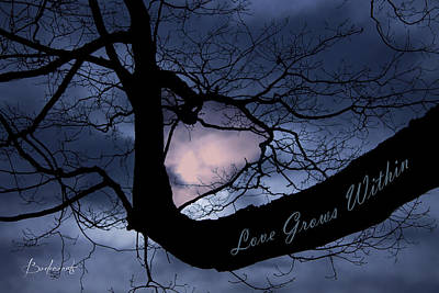 Heart In Tree Love Grows Within  Poster by Robin Lewis