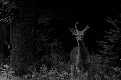 Poster featuring the photograph Hello Deer by Cheryl Baxter