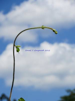Help Me Grow Poster by Sonali Gangane