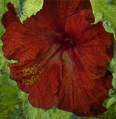Poster featuring the photograph Hibiscus Plus Fern by Barbara Middleton