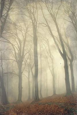 High Rising Trees Poster by Dirk Wüstenhagen Imagery