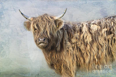 Highland Cattle Poster by Louise Heusinkveld