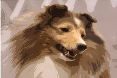 Holly The Collie Poster by Donna G Smith