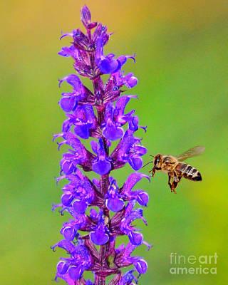 Honeybee N Blooms Poster