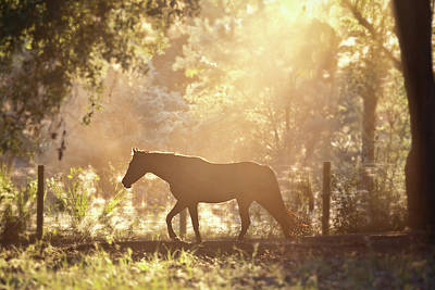 Horse Backlit At Sunset Poster by Seth Christie