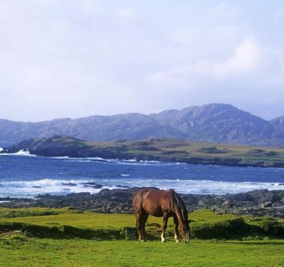 Horse Grazing In A Field, Beara Poster