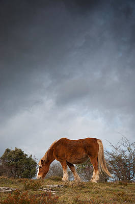 Horse Grazing On Route Poster