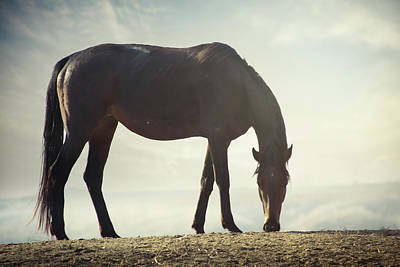 Horse In Wild Poster
