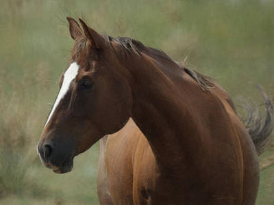 Horse Painterly Poster