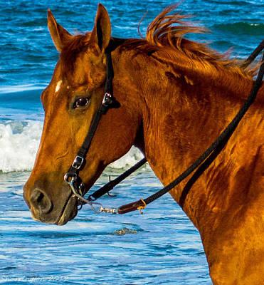 Horse Portrait  Poster by Shannon Harrington