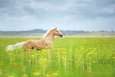 Horse Running In Field Poster by Arman Zhenikeyev - professional photographer from Kazakhstan