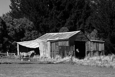 Horses And Old Barn Poster