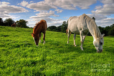 Horses Grazing Poster by Rob Hawkins