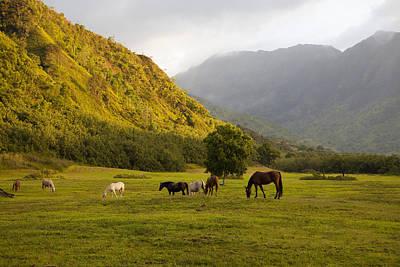Horses In Field,haena,kauai,hawaii Poster