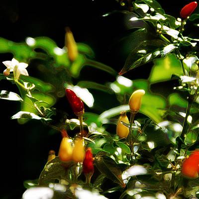 Hot Pepper Poster