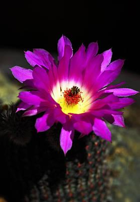 Hot Pink Cactus Poster