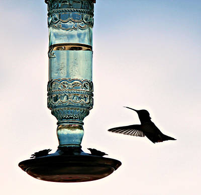Poster featuring the photograph Hummer At The Feeder by Jo Sheehan