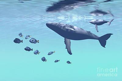 Humpback Mother And Calf Swim Poster