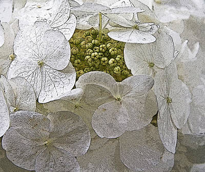 Poster featuring the photograph Hydrangea by Michael Friedman
