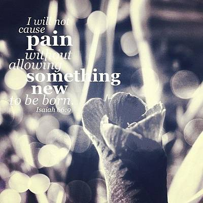 ...i Will Not Cause Pain Without Poster by Traci Beeson