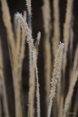 Ice Crystals On Tall Grass Poster by Mick Anderson
