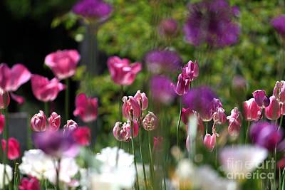 iIn the Garden Poster by Billie-Jo Miller