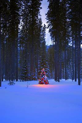 Illuminated Christmas Tree In The Woods Poster by Carson Ganci