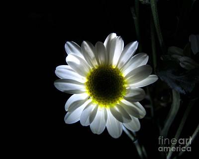 Illuminated Daisy Photograph Poster