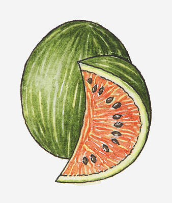 Illustration Of A Slice Of Watermelon And A Whole Watermelon Poster by Dorling Kindersley
