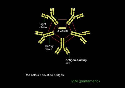 Immunoglobulin Pentamer, Artwork Poster by Francis Leroy, Biocosmos