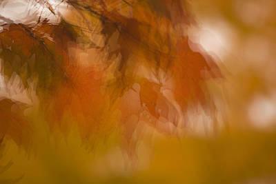 Impressionistic Maple Poster