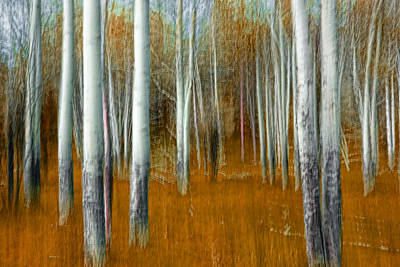Impressionistic Orange Forest Poster