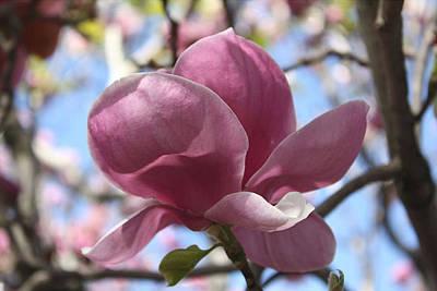 In Full Bloom Nb Poster