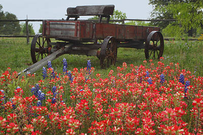 Indian Paintbrush And Wagon Poster