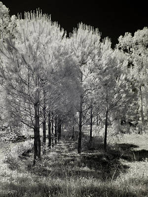 Infrared Trees Poster by Stavros Argyropoulos