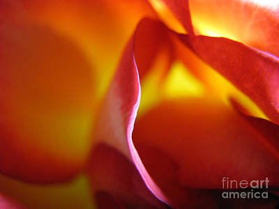 Poster featuring the photograph Inner Flame by Stacey Zimmerman