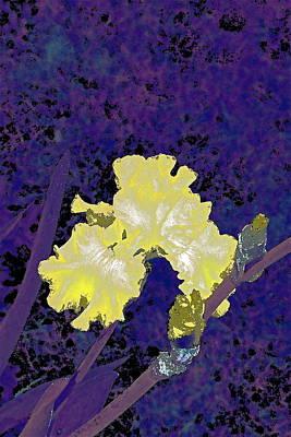 Iris 36 Poster