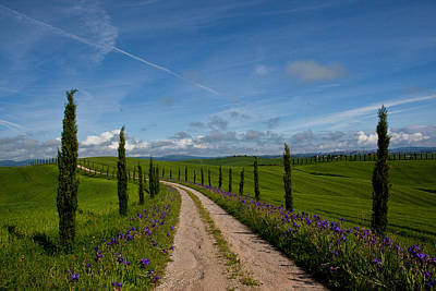 Iris Grow Amid New Cypress Growth Poster by Kenneth Ginn
