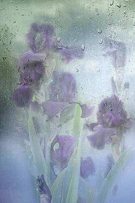 Iris In The Spring Rain Poster by Diane Schuster