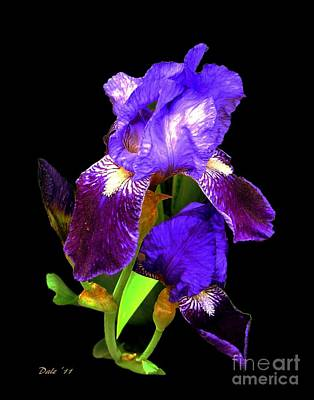 Iris On Black Poster by Dale   Ford