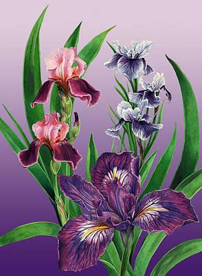 Iris On Purple Poster
