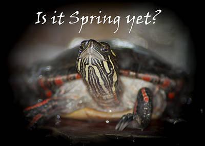 Is It Spring Yet Turtle Poster by LeeAnn McLaneGoetz McLaneGoetzStudioLLCcom