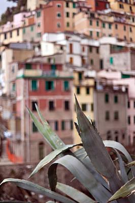 Italian Aloe Poster by Mike Reid