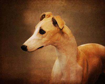 Italian Greyhound Poster by Jai Johnson