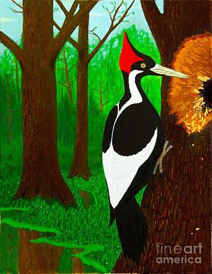 Ivory-billed Woodpecker Poster