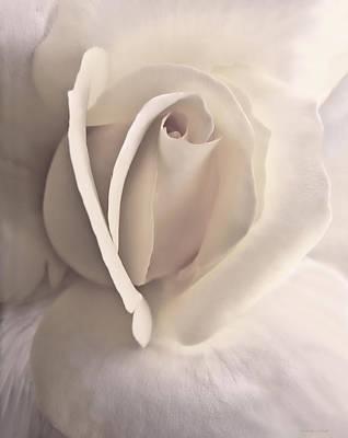 Ivory Splendor Rose Flower Poster