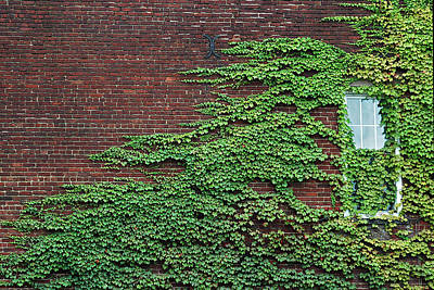 Ivy Covered Window Poster by Gary Slawsky