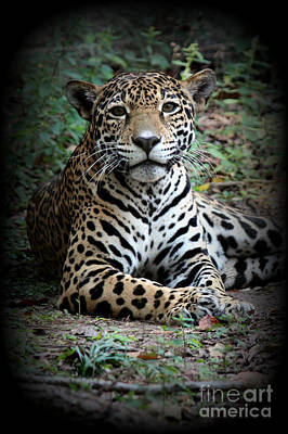 Poster featuring the photograph Jaguar Portrait by Kathy  White