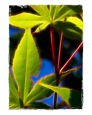 Poster featuring the photograph Japanese Maple Leaves by Judi Bagwell