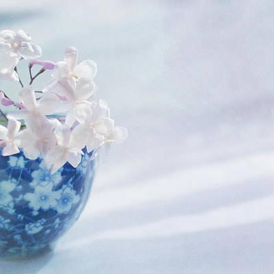 Jasmine Flowers In Pot Poster by Jill Ferry